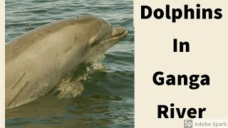 Gangetic dolphins spotted after 30 years - 30 साल बाद गंगा में दिखी dolphin | lockdown