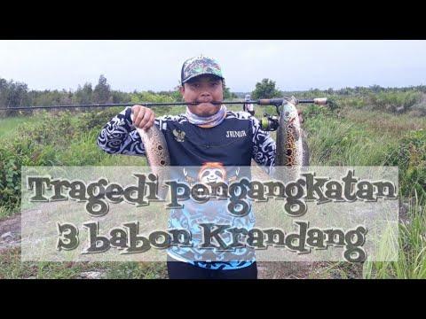 Download Tragedi Csting moster rawa penghuni tanggul #sabar Ep8