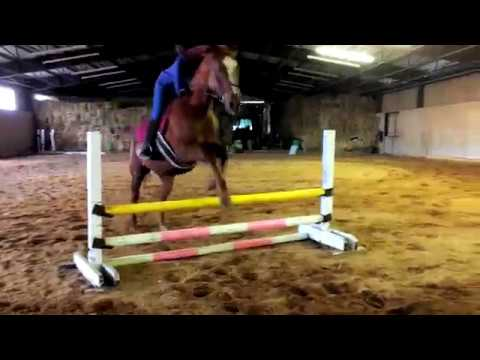 Jake - Horse for Lease in Central PA