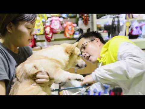 TEDDY DOG's SHOP VIETNAM
