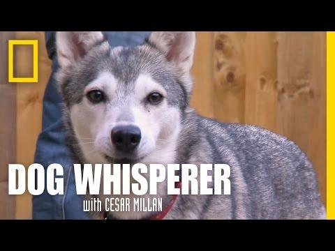 An Organic Conversation   Dog Whisperer