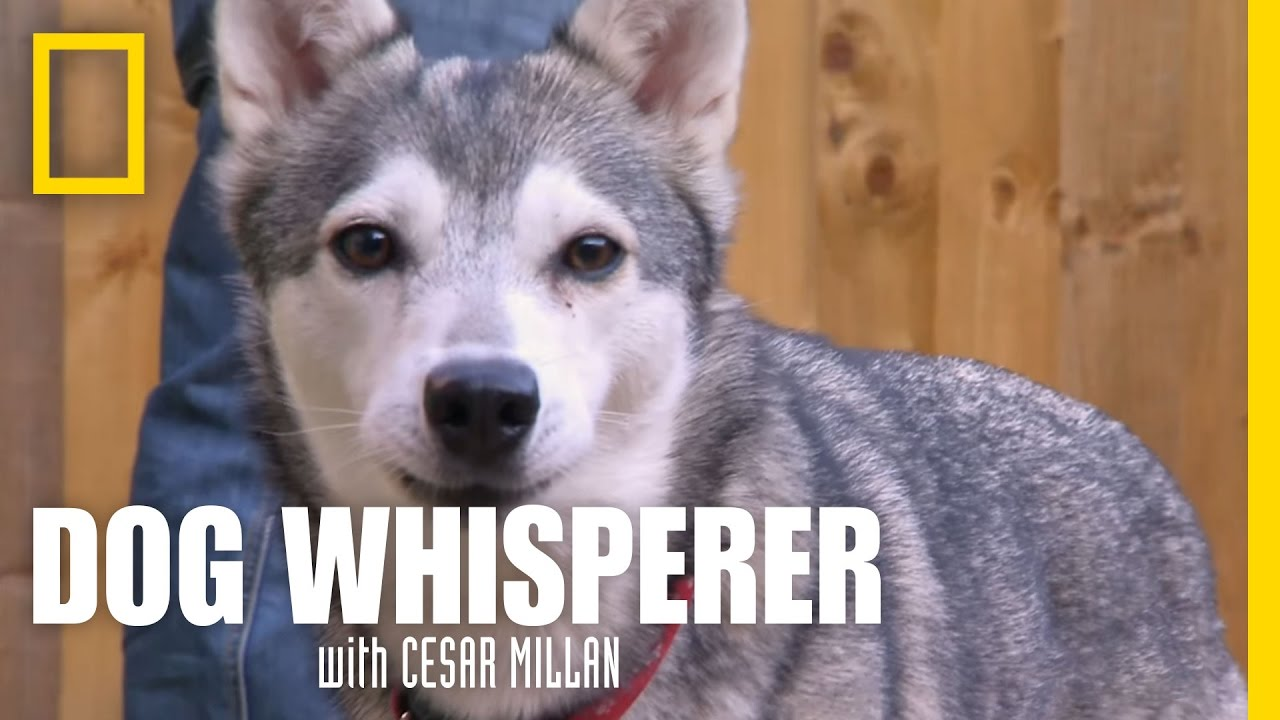 An Organic Conversation | Dog Whisperer
