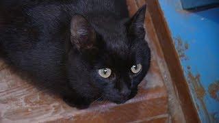 Среда обитания. «Возвращение кота домой»