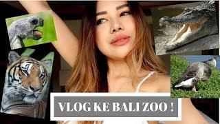 Gambar cover BALI ZOO VLOG !  susah bedain singa & macan :P