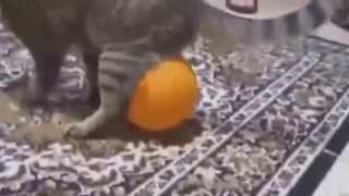 коты и кошки зажигают подборка приколов