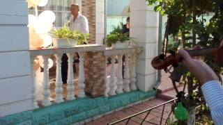 Саша-Скрипач на встрече жениха,г.Резина,Молдова