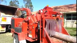 Morbark M17RX Shredding Large Ghost Gum   Gatton, QLD