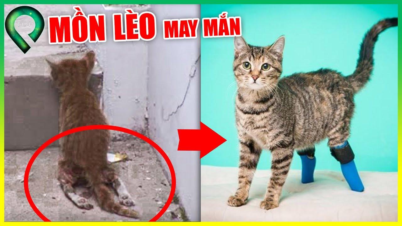 Bị Máy Cưa C.Ắ.T Đ.Ứ.T Lìa Chân Chú Mèo Vẫn Sống Sót Thần Kỳ | Những Động Vật Nghị Lực Phi Thường