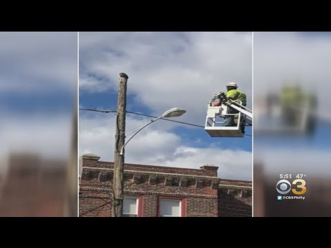 Verizon Worker Suspended After Rescuing Cat In Port Richmond