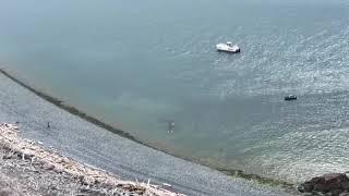 Нападение касаток на кита в Приморье