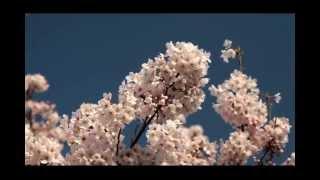 25 кадр похудение все ролики Sakura1W, slander+