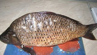 Домашняя селедка -Маринованная рыба – карп( толстолоб)
