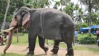 Top Ten State Symbols of Kerala | Secrets of Kerala Culture | How to Experience Kerala the Right Way