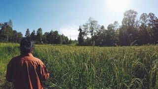 VLOG | My mother's rice field. Hmoob mov nplej tshiab!