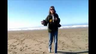 January 16, 2013 - Barefoot on the North Coast of California with SandPipers
