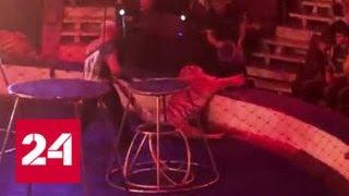 Тигрица упала в обморок во время шоу - Россия 24