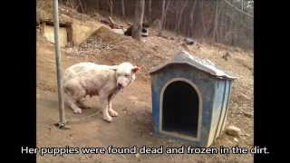 Bomi: A South Korean Dog who was Rescued from Dog-Meat Slaughter