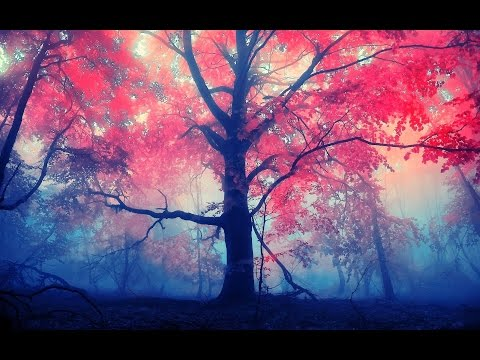 ♫ Euphoric • Melodic • Female • Vocal Trance ♫ 2016 - [Part 1]