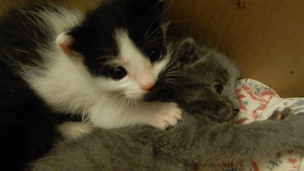 Bitten By A Kitten Rescue baby kitten videos