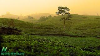 Lead Contamination of Tea