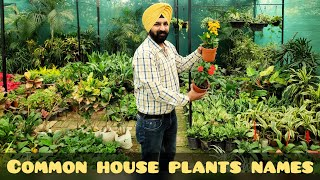 Beautiful foliage plants names n care, common house plants, ornamental plants, must have plants