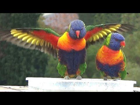 Bird TV: 1-hr video for your pet birds, cats, & humans