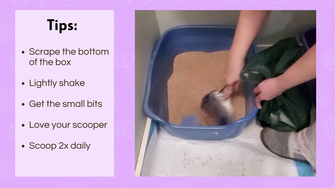 Tips for daily litter scooping
