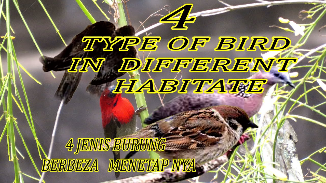 Download BIRD IN THEIR HABITATS