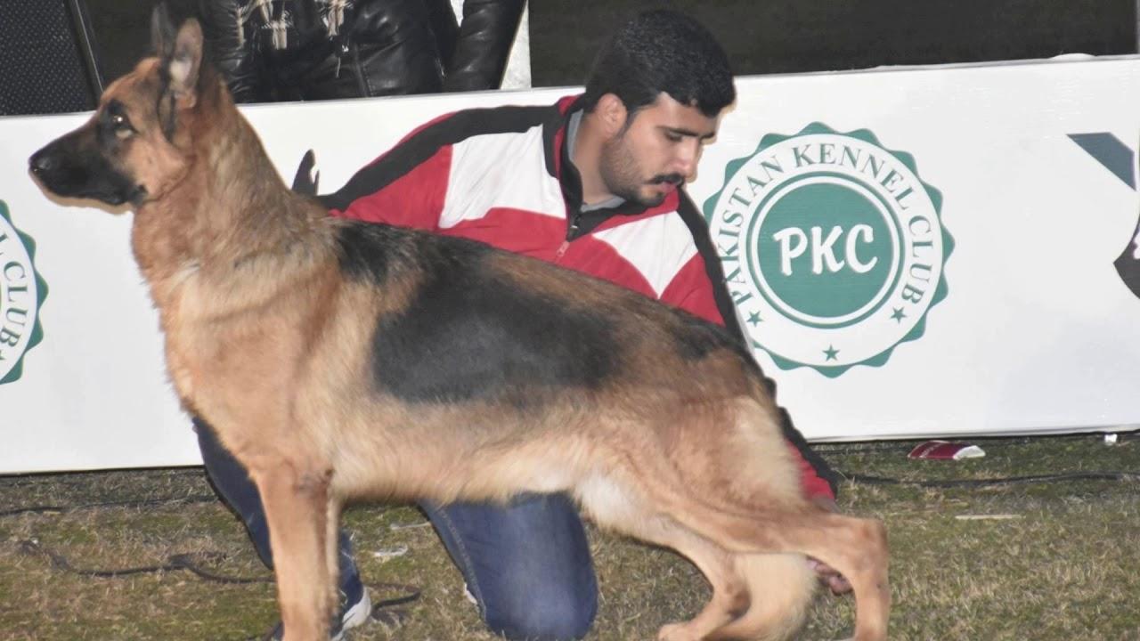 Pakistan Kennel Club All Breed dog show Faisalabad, Pakistan