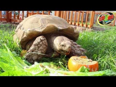 Zoo Med Thanksgiving 2013