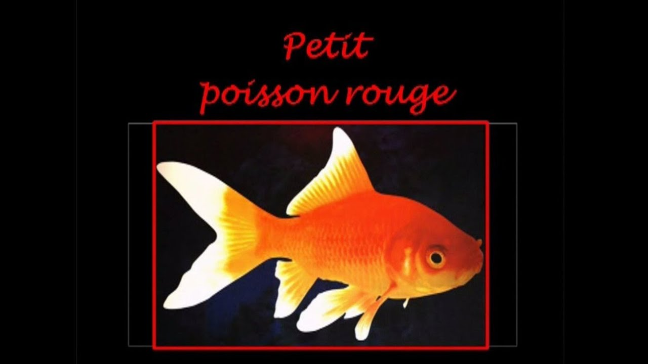 Petit poisson rouge youtube for Petit poisson rouge