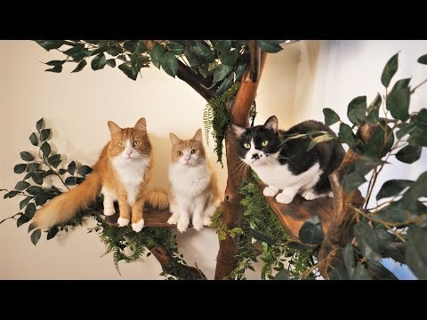 I made a tree for my cats out of driftwood