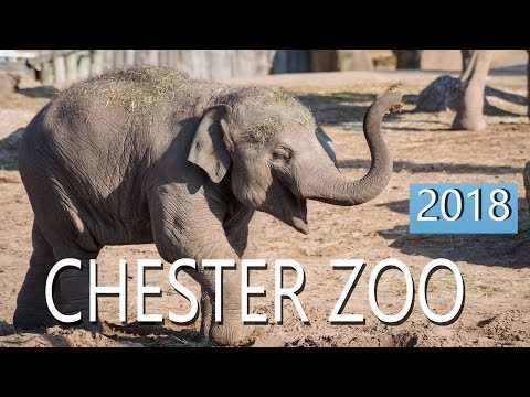 Chester Zoo 2018