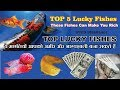 Top 5 lucky fishes to have in our home to get more wealth and health #Fishes can make you rich