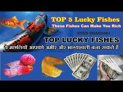 Top 5 Lucky Fishes To Get Rich Wealth And Health These Fishes Can Make You Rich
