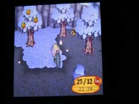 Animal Crossing Wild World Special Fish And Bugs