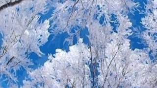 Debussy: Des pas sur la neige (Frederique Cambreling, harp)
