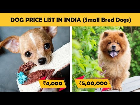Dog Prices In India - Part 2 (Small Breed Dogs) | Budget Friendly Dogs