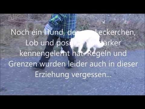 www.cani.training - Orientierung des Hundes ohne Leine, Antijagdtraining, Hund zieht an der Leine