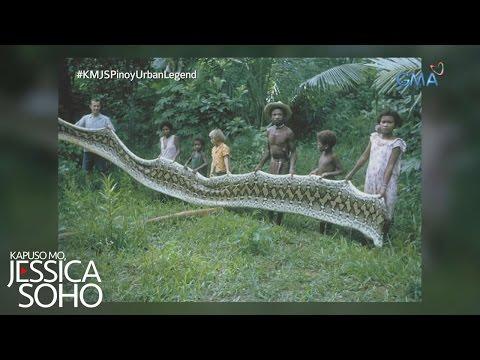 Kapuso Mo, Jessica Soho: Dambuhalang sawa ng Sierra Madre