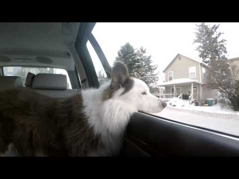 Dog watches snowy SE Portland slide by on morning drive