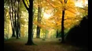Satya song