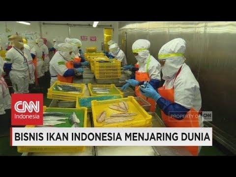 Bisnis Ikan Indonesia Menjaring Dunia - Insight With Desi Anwar