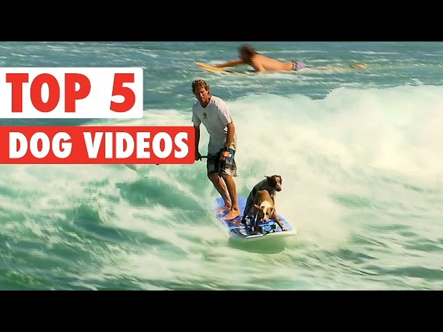 Top 5 Amazing Dogs Compilation || March 25 2016
