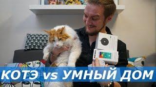Как сделать умную квартиру, и подглядывать за котами?