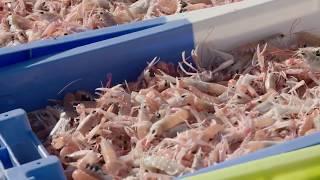 Playlist Gastronomie de Lorient Bretagne Sud Tourisme :