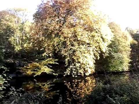 Нормандия.В темно-синем лесу,где трепещут осины...