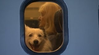 Flight School For Dogs To Help Them Travel On Planes
