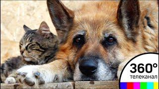 Центр реабилитации временно бездомных домашних животных открыли в Подольске