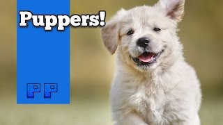 Paws and Claws Pampered Pets -Pp-